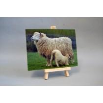 3D Postkarte mit Schaf