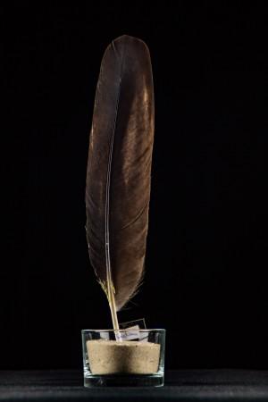 Feder - Seeadler